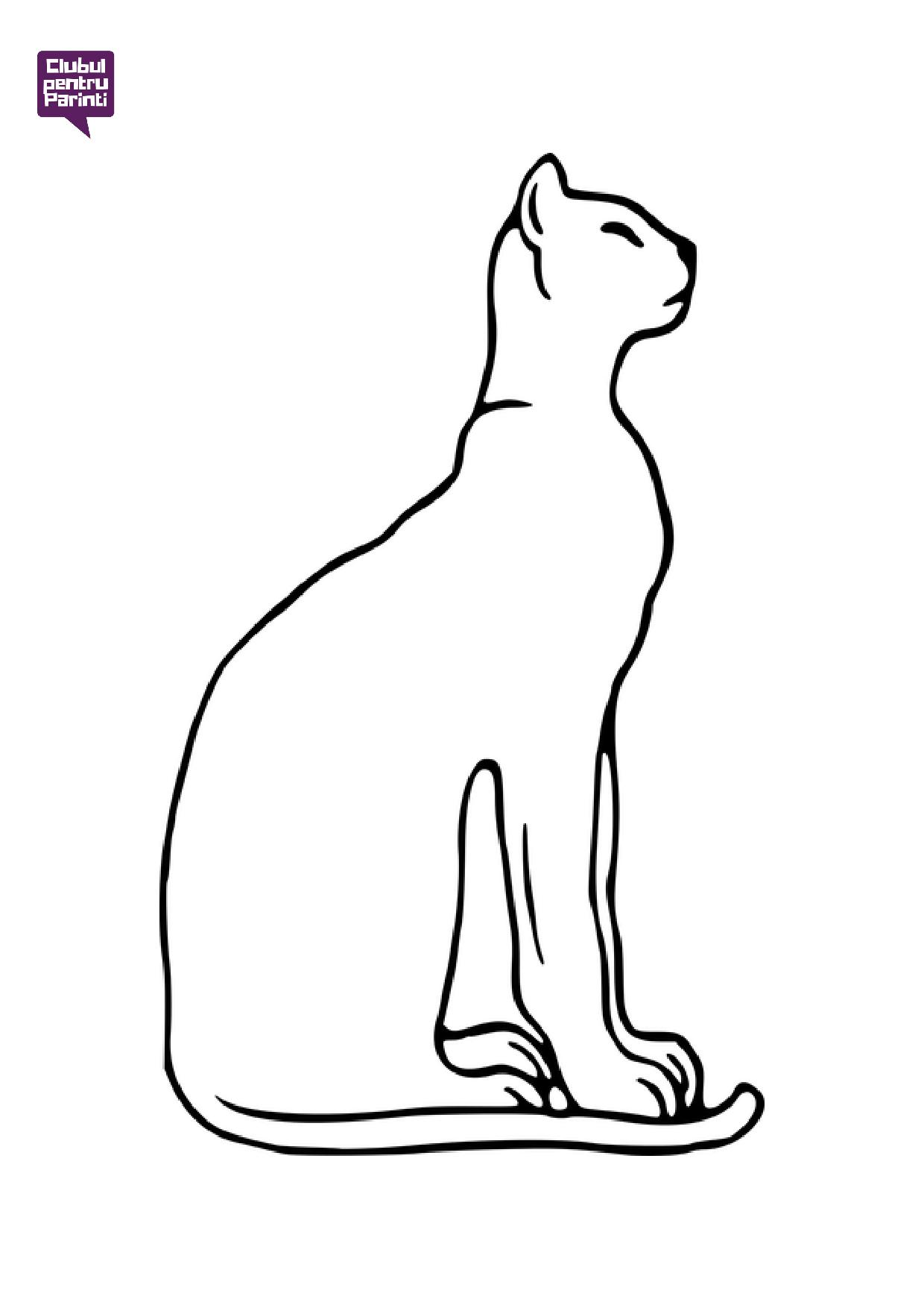 pisica 10