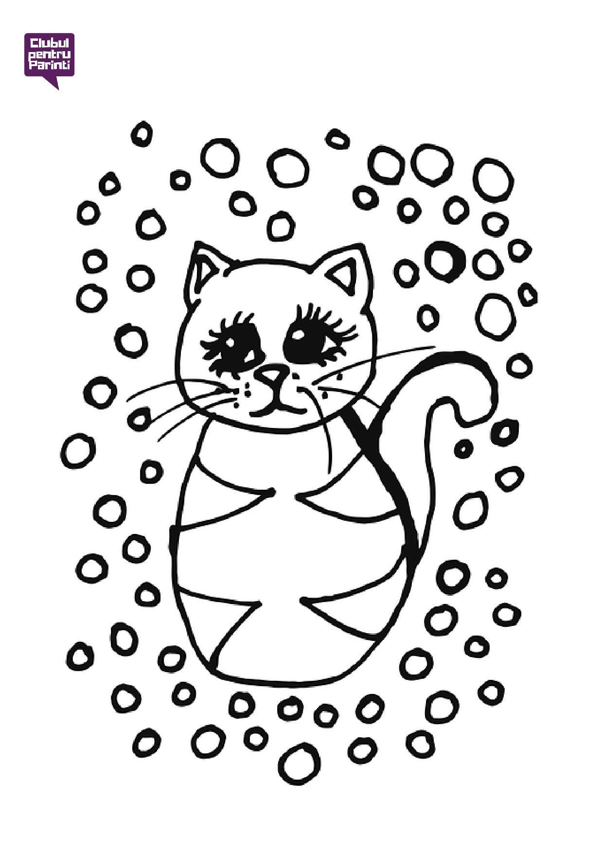pisica 12