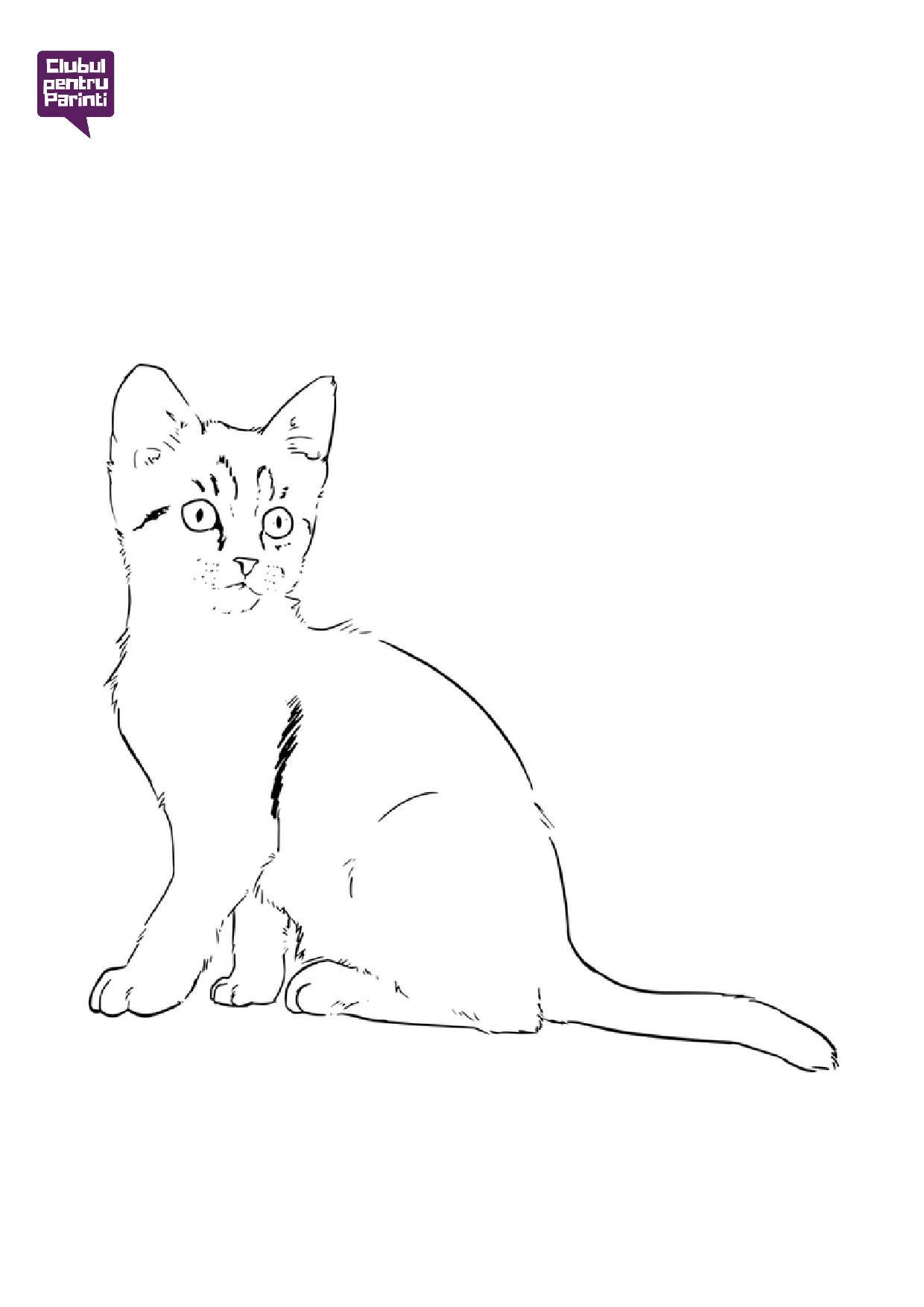 pisica 4